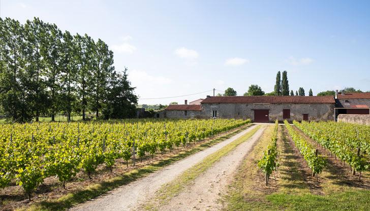 La Vigne Lechat Et Fils
